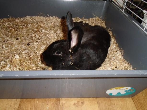 mother and daughter rabbits for sale