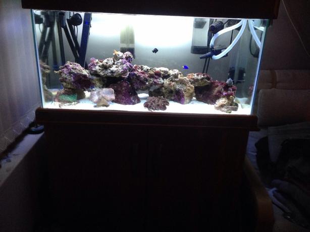 marine tank full setup
