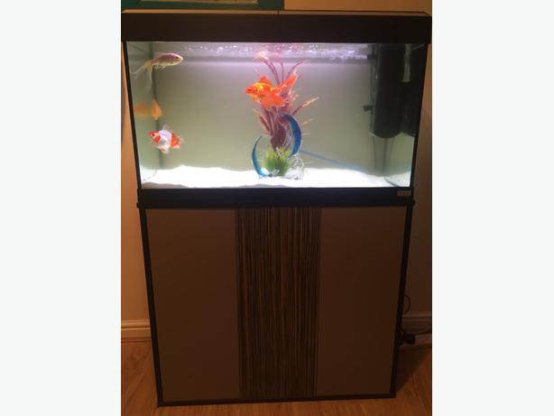fluval roma 125L fish tank & cabinet £125 ono