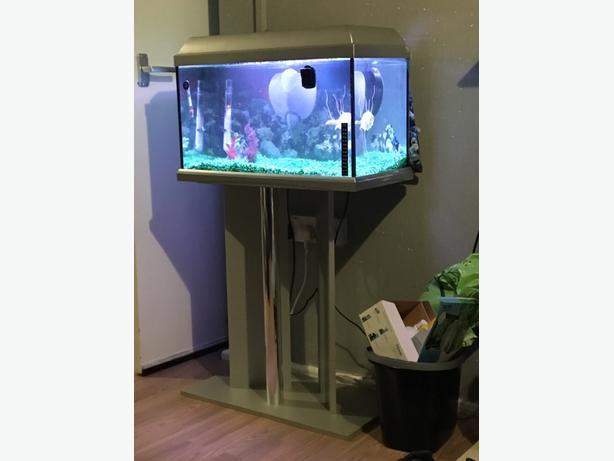 100 ono fish tank