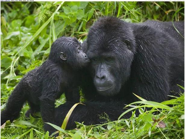 12 Days Rwanda-Uganda Wildness