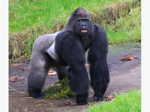 5-day Uganda- Rwanda gorillas tracking safari