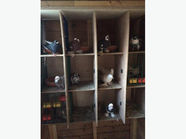 set of pigeon boxes
