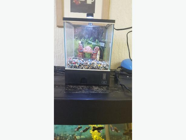 small cube fishtank