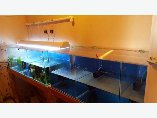 FOR TRADE: breeding tanks with lots of extras