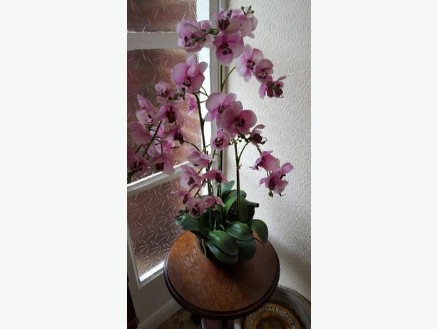 Orchid display plant