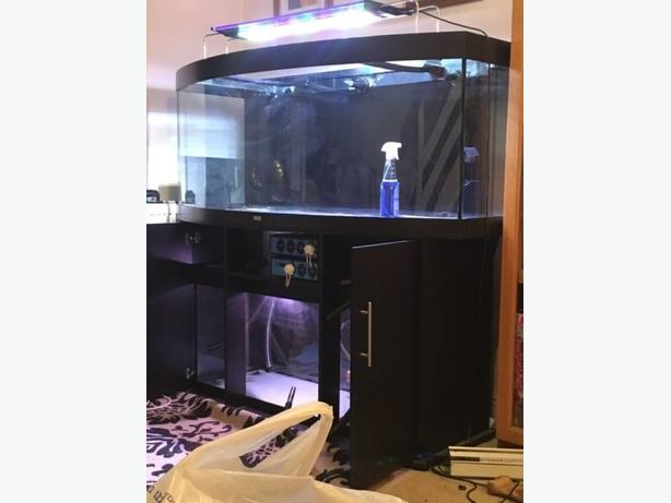 fish tank marine or tropical
