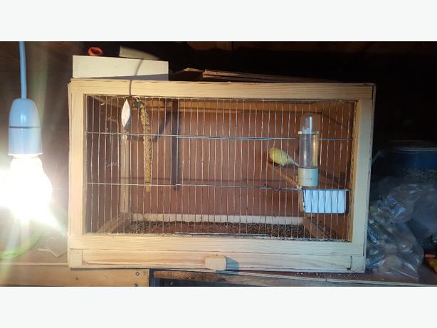 hen canary last years wiv breeding box