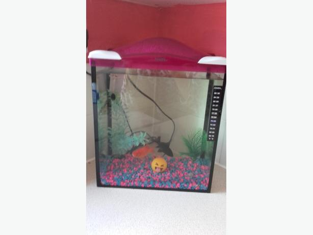 pink fish tank with 2 fish