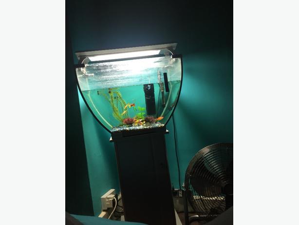 fish tank with fish