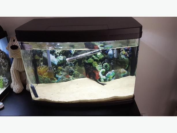 65ltr fish tank with heater pump and ornament walsall dudley for Best fish tank heater
