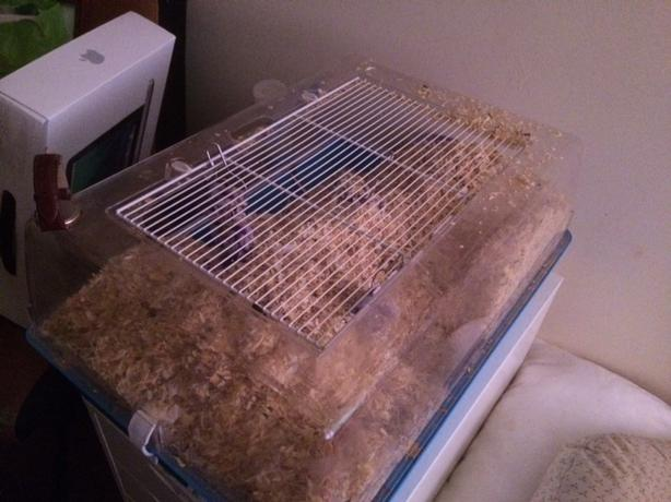 two gerbils, cage & food
