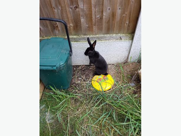 Pandora Rabbit Charm 2016