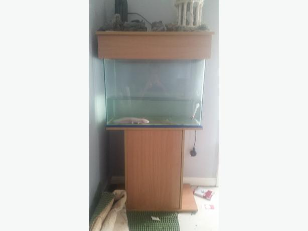 2 foot fishtank with oxalotal