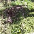 overgrown gardens? no problem