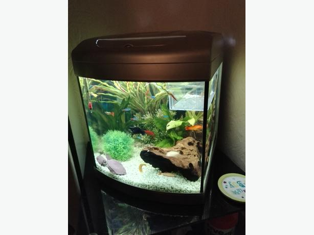 Full tropical setup willenhall wolverhampton for Fish tank with built in filter
