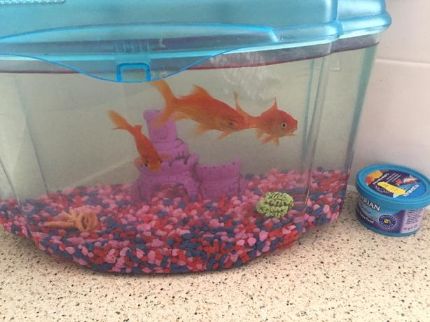 3 Goldfish Tank Accessories Food Dudley Sandwell