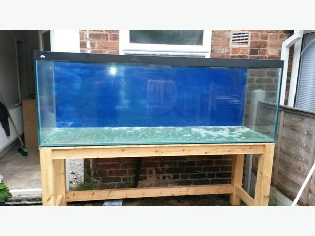 fish tank 7ft