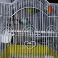 parrolets with cage