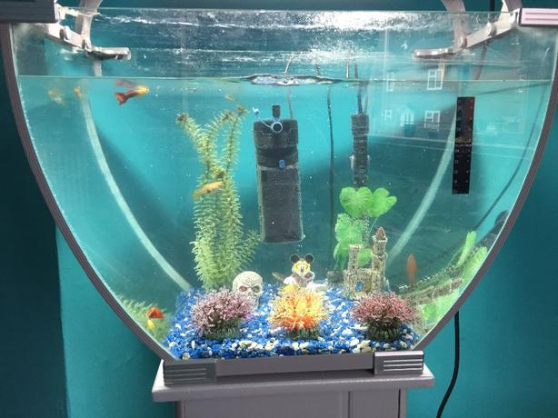 Fish tank rowley regis sandwell mobile for Used fish tanks for sale many sizes