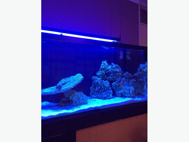 live rock matured over 2 years! 100% pest and algae free! bargain