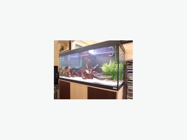 FLUVAL ROMA 240 4FT FISH TANK FULL SETUP WITH CABINET AND EXTERNAL FILTER