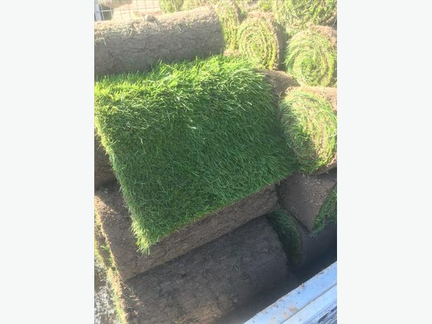 Turf left over from this morning, fresh