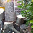 logs for sale Ash and Sycamore