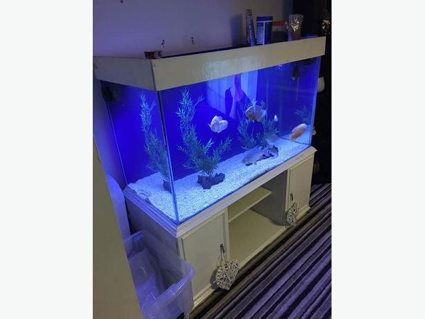 large tank cheap