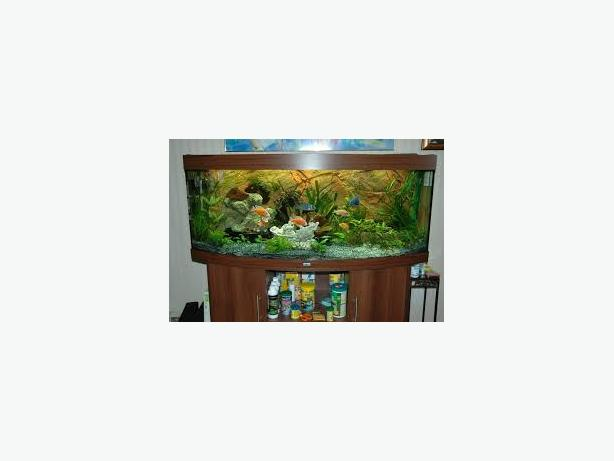 JUWEL VISION 450 5FT MAHOGANY BOW FRONT FISH TANK FULL SETUP WITH CABINET