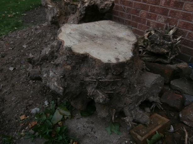 FREE: Ideal Wood Stump Stools That Would Look Great In The Garden
