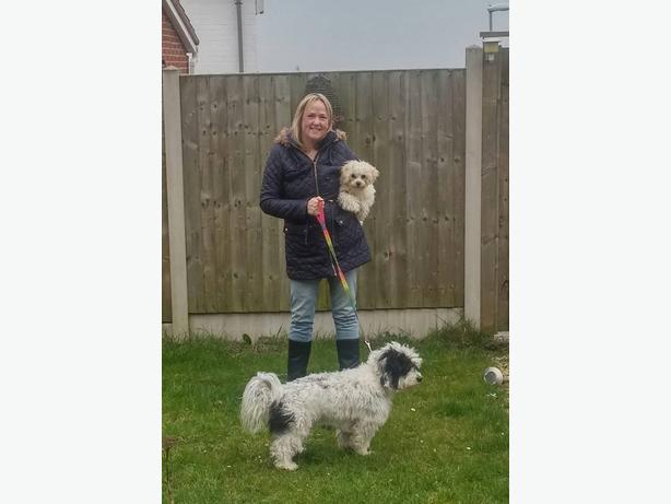 Walkies. Dog walking and Pet Sitting