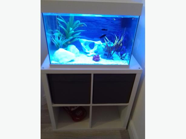 fish tank full set up with unit