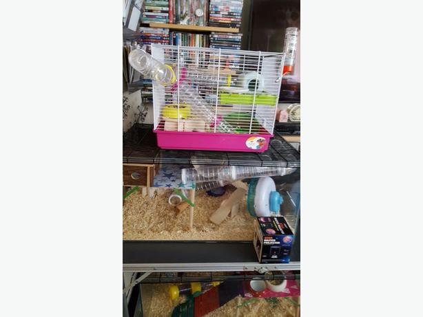 hampster cage and tank