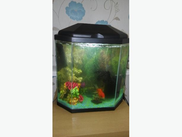 30l fish tank all accesories and two oranda fish