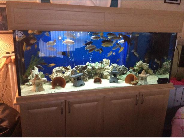 5ft. Fish tank