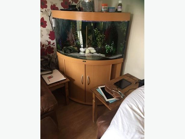 JUWEL TRIGON 190 BEAUTIFUL LARGE CORNER FISH TANK FULL SETUP WITH CABINET