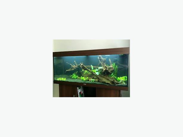JUWEL RIO 180 3,5 FT MAHOGANY FISH TANK FULL SETUP WITH CABINET