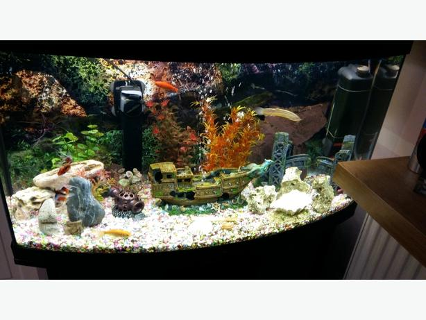 curved fish tank..
