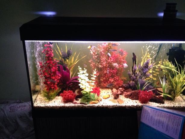 200lt fish tank