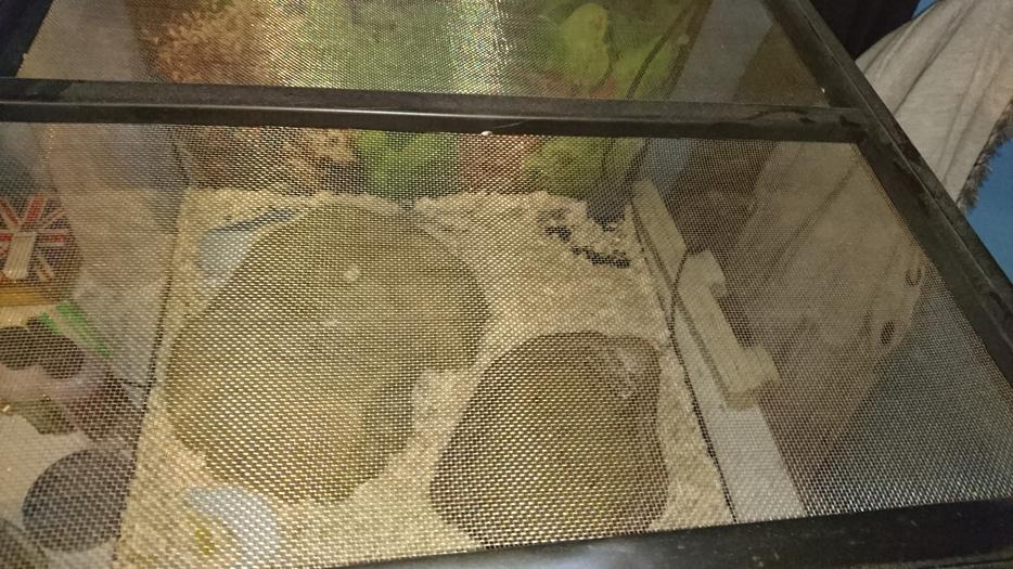 Exo Terra Vivarium With Milk Snake Outside Black Country