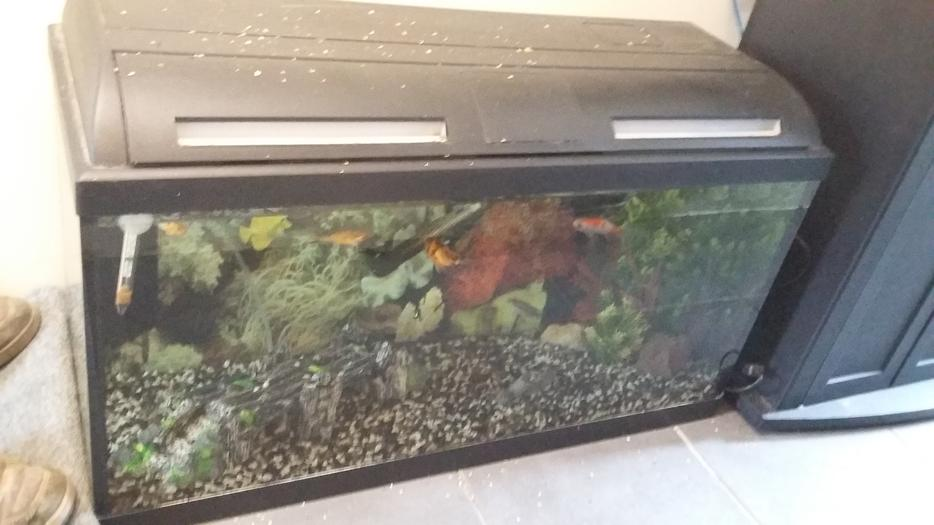 Fish tank for sale sedgley dudley for Amazon fish tanks for sale