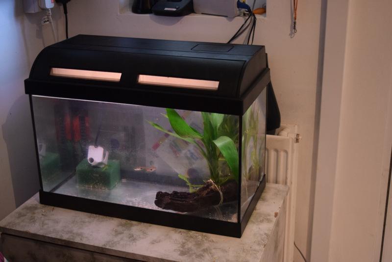 Fish tank fish wolverhampton wolverhampton for Used fish tank