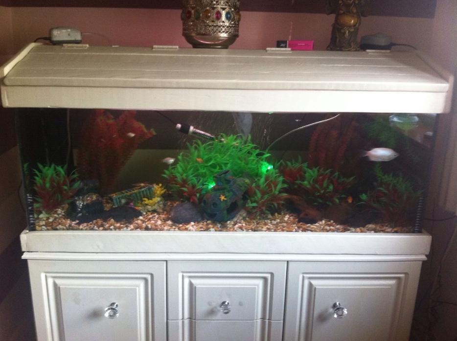 Fish tank stourbridge sandwell for Tap tap fish corgi