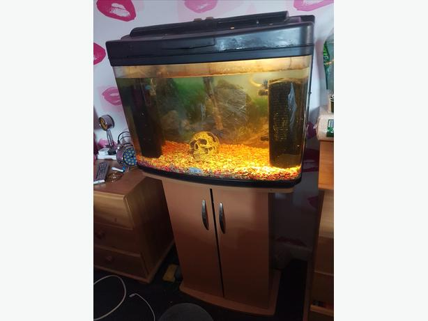 Fish tank with stand 1 fish and more halesowen sandwell for Amazon fish tanks for sale