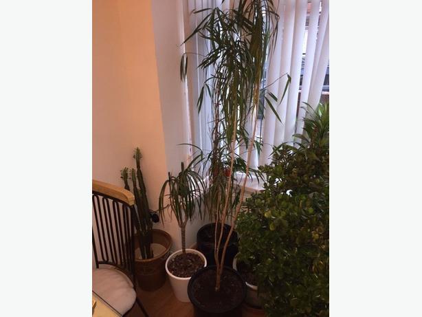 4 beautiful house plants other wolverhampton - Beautiful house plants ...