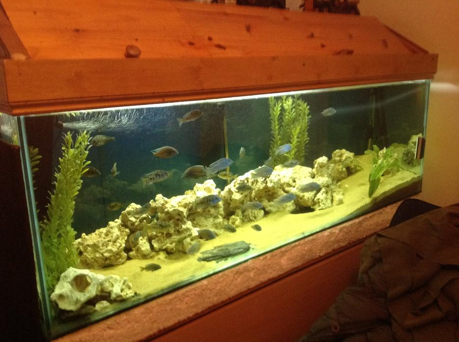Price down 6f fish tank walsall sandwell mobile for Used fish tank