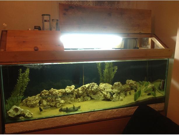 Price down 6f fish tank walsall wolverhampton mobile for Fish tank price