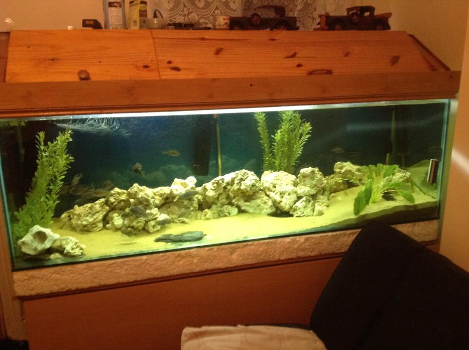 Price down 6f fish tank walsall sandwell mobile for Fish tank price