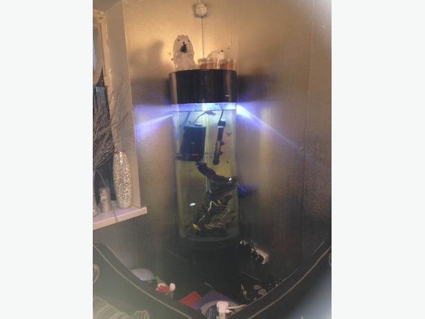 Fish tank tipton dudley for Fish tank with filter and heater